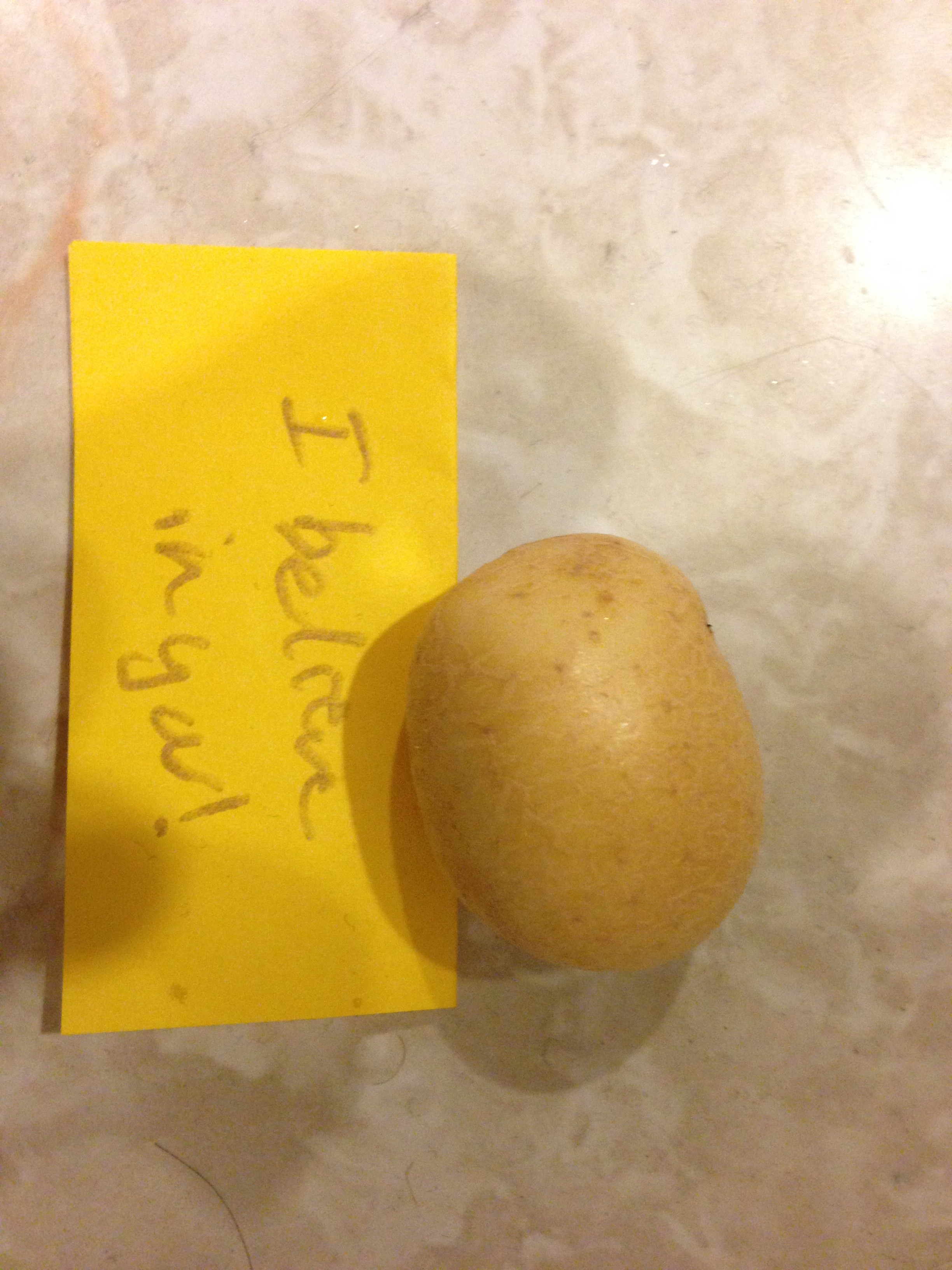 This tiny potato helped us through many a difficult time.  Its love is still with us.